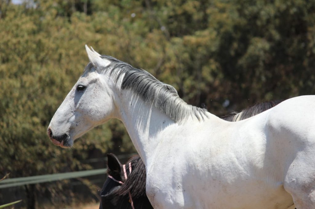 For Sale: Glory – R25 000